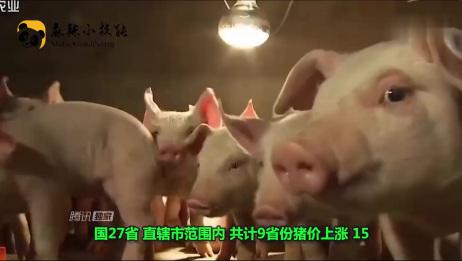 5月17日生猪价格行情表,全国近半数地区的价格都在下跌!