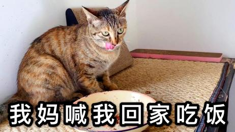 狸花猫找不到怎么办?亲妈出场一个顶俩,三花猫亲自出马逮回家