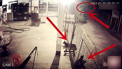 深夜两条狗狗在看家!其中一条发现不对劲及时逃逸保住一命!监控拍下这一幕