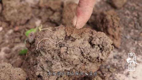 """养花知识:花盆里发现""""蚯蚓""""?留还是不留?看老花匠是怎么做的"""