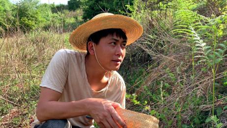 农村媳妇想吃野果,老公上山去摘,没想到有意外收获!
