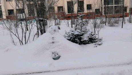 东北又下大雪了冰天雪地白茫茫一片