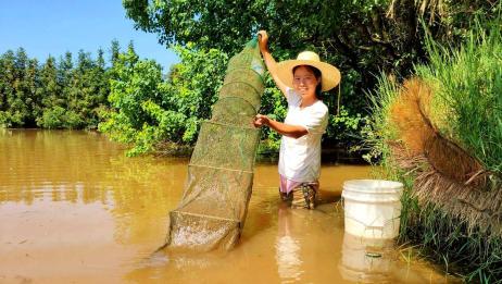 小秀花50元买了1个地笼,在池塘里放了三天三夜,收获多少野味?