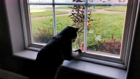 猫咪遇到鸟之后的反应,出现了迷惑行为,真是看一次笑一次