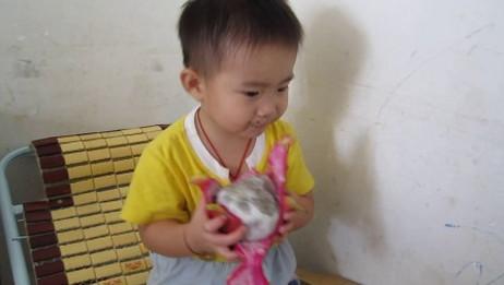 爆笑两岁小孩吃火龙果