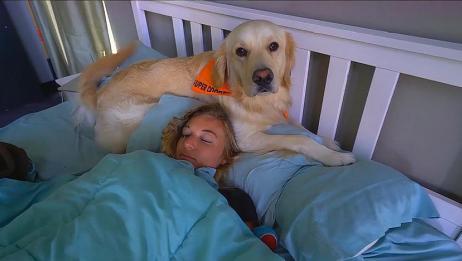 金毛每天准时叫醒女主人,主人不愿起便想方设法叫醒,真是没谁了