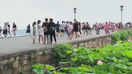 杭州西湖断桥——接天莲叶无穷碧,映日荷花别样红