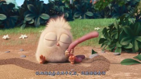 蚯蚓生活在土里,为什么一下雨就钻出地面?真相令人心痛!