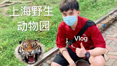 VLOG丨带你云逛32℃下的上海野生动物园