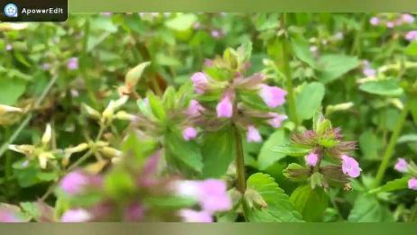标本制作的方法 植物标本的制作