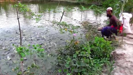 这池塘里养的鱼真是太多了,鱼食一抛,全部来抢的吃!