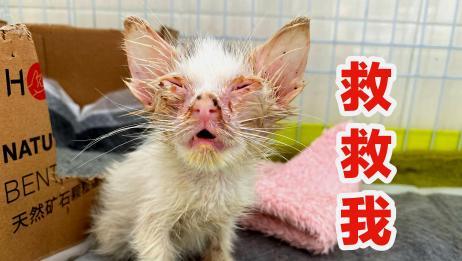 """又""""捡""""一只流浪猫,皮包骨头发育迟缓,要活下去呀!"""