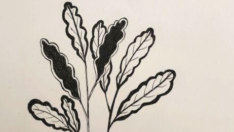 简单黑白线描植物绘画~一起来画画吧~