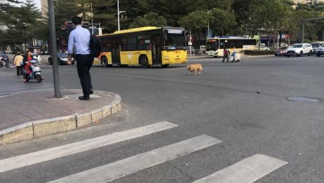 行走途中,发现一只狗子,在十字路口游荡。又是一个孤独的灵魂