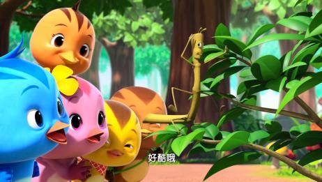 萌鸡小学堂:竹节虫能歌善舞,居然还能跳霹雳舞,萌鸡们很喜欢呢