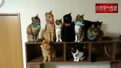 9只猫咪一起同步摇头晃脑的, 真的太厉害了!