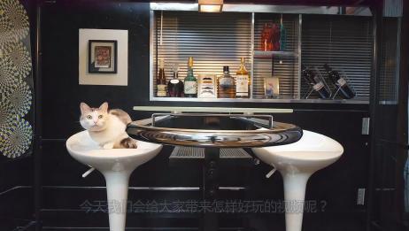 猫咪到酒吧买醉,服务员端来一杯酒,立马就被猫咪喝得精光!