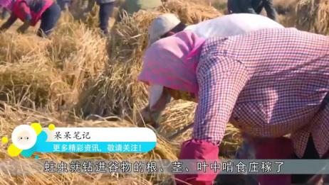 """家里的大米放久了,为什么会长出""""米虫""""?看完解开多年疑惑"""