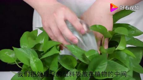 花盆上放一个塑料袋,就可以放心的出远门了,是不是很实用