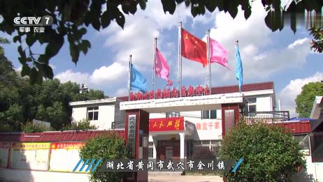 CCTV,7湖北省黄冈市武穴市余川镇