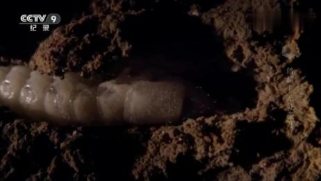 几百万只长着翅膀的白蚁出现了,数量竟然是如此之多