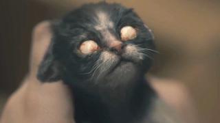恐怖片:女孩在鬼宅养五只猫,一天死四只,最后这只天生白眼