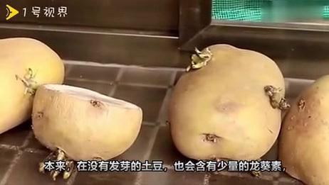 土豆发芽后还能不能吃,会中毒么,很多人弄错了