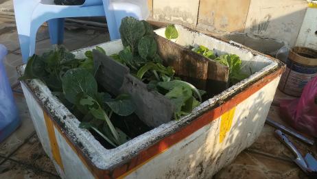 早知道堆肥这么简单,种花的营养土就不用再买了!
