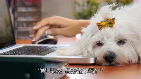 3分钟教会你如何和你的狗说话?