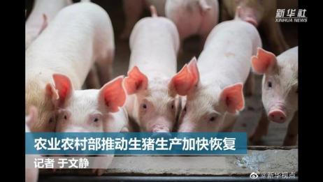 农业农村部推动生猪生产加快恢复