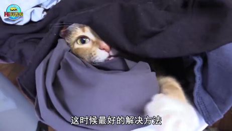如果猫咪向你翻身露肚皮,可以抚摸它吗?