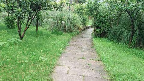 雨中漫步,孤单是一个人的狂欢!