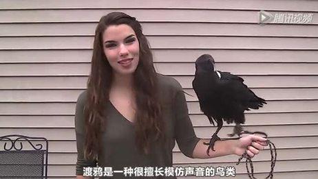 【中文字幕】原来渡鸦是可以说话的!要成精了