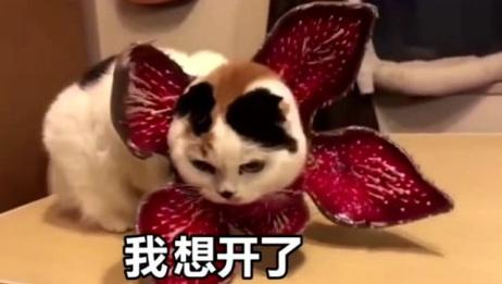 猫咪变成异形怪物了,好可怕