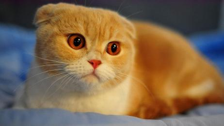 一只被偷拍的喵星人生气了,瞪着大大的眼睛:本小喵可是有脾气的