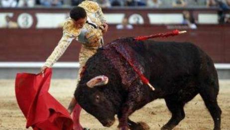 西班牙斗牛,公牛玩命的用牛角顶上着斗牛士,场面太惊险了