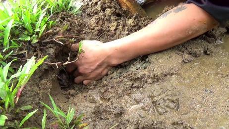 美女野外发现鱼洞,男友直接伸手进去挖,一条大鱼收入囊中!