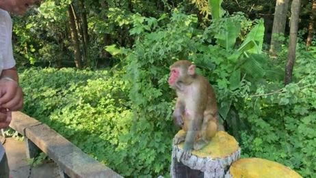 2019湖南张家界国家森林公园, 奇景气盖世! 不虚此行呀!