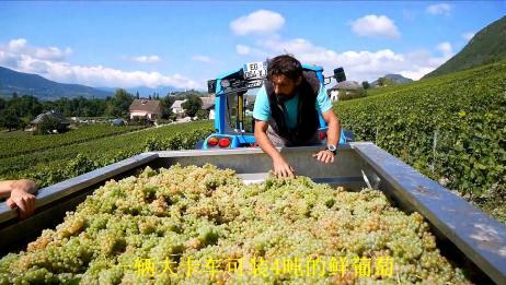 探秘法国白葡萄酒酿制过程,伊夫·吉拉德·马多克斯酒庄