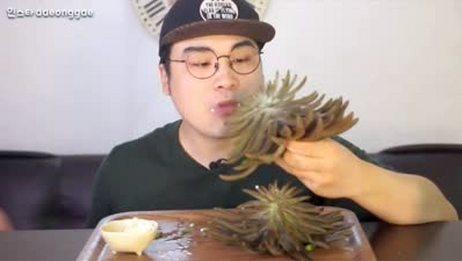 韩国吃播:大胃王豪放派donkey弟弟吃4大朵多肉植物,丧心病狂