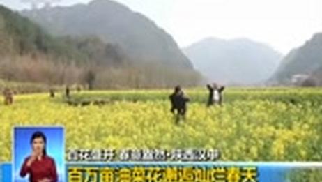 [共同关注]百花盛开 春意盎然·重庆 正值踏青时节 万亩李花山中绽放