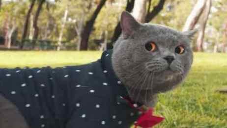 网红表情猫来了,这次他走上了街头