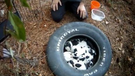 9只刚出生的流浪狗宝宝正等待妈妈归来,结果令人感动!
