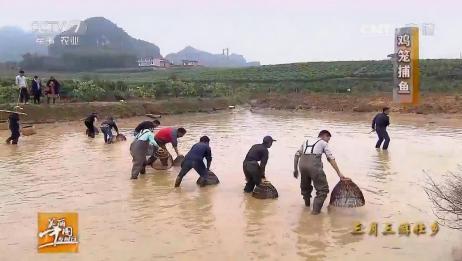 美丽中国乡村行:清河品丰收——用鸡笼在池塘捕鱼,乐趣不断!