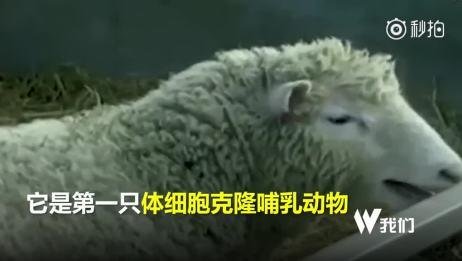 2分钟回顾动物克隆史:从第一只克隆蛙到克隆猴