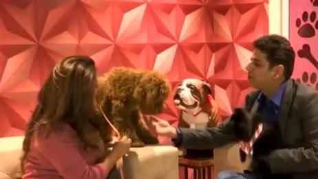 首家豪华狗狗旅馆诞生印度,只有狗狗才能入住呦!