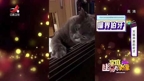 猫咪界的情圣 看这眼眶含泪又欲言又止的眼神 绝对演技王