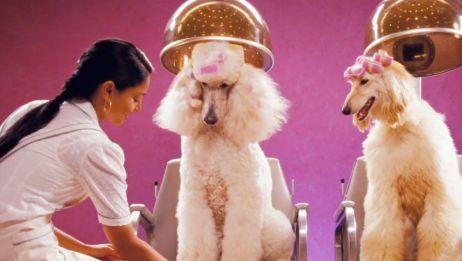一间为流浪狗服务的旅馆,美容美发娱乐一应俱全,过得比人类还好,《狗狗旅馆》