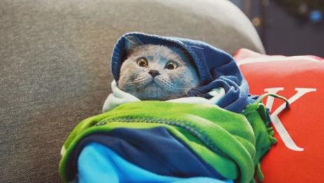 今天真的是超级悲伤的一天,小猫去酒吧,竟然因为年纪不够被拒?