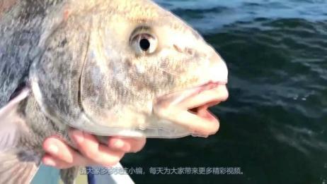 患癌人数日益增多,医生怒斥鱼的这个部位,一定不要吃,扔掉!